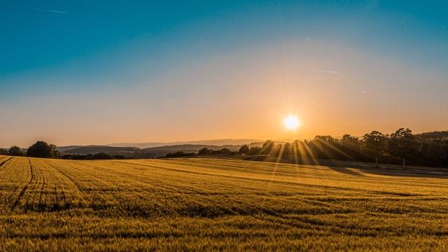 Ochrona zbóż jarych dobrymi metodami